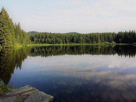 Nature, Moor, Wetland, Marsh, Water, Mirroring