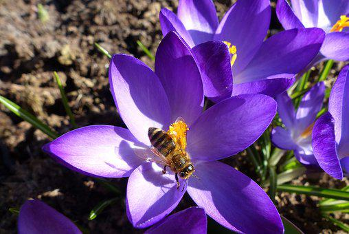 Flower, Bee, Blossom, Bloom, Nature, Plant, Close
