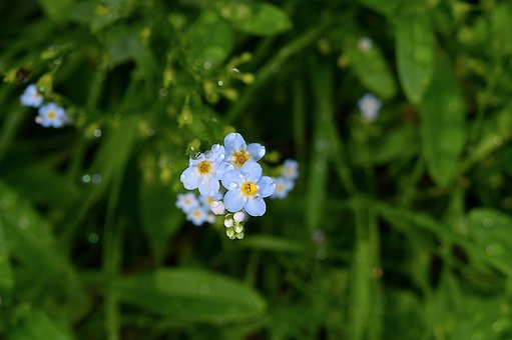Flower, Bloom, Dew, Rain, Floral, Nature, Blossom