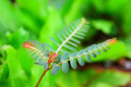 Fern-leaf, Green, Flora, Leaf, Fern, Nature, Plant