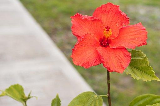 Flower, Plant, Nature, Spring, Plant Wildlife