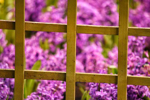Frame, Flower, Purple, Floral, Pattern, Design