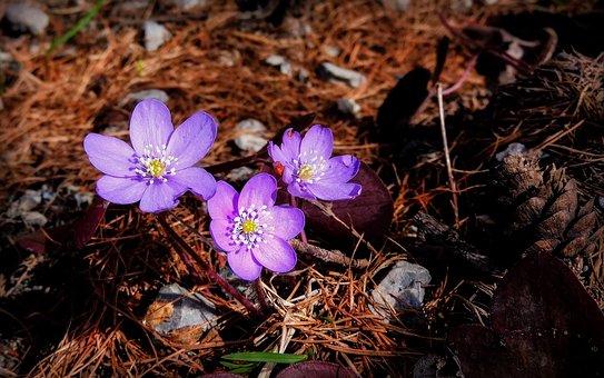 Flower, Flowers, Bloom, Wildflowers, Mountain, Forest