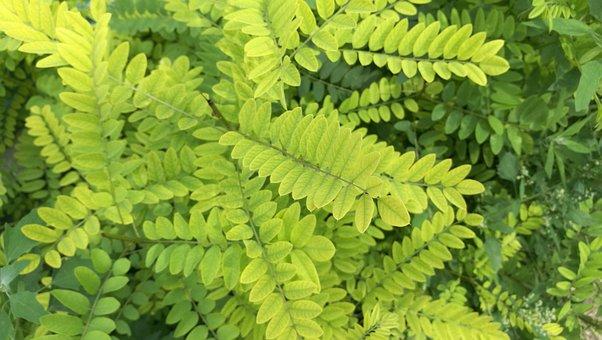 Foliage, Bush, Shrubs, Green, Summer, Nature, Forest