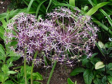 Flowers, Purple, Green, Garden, Summer