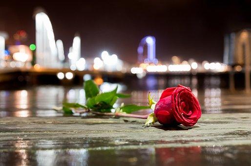 Flower, Rose City, Sea, Rain, Fragrance, Magical