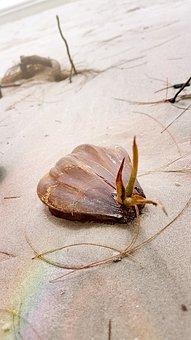 Beach, Shell, Sea, Summer, Sand, Travel, Vacation