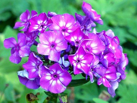 Flower, Summer, Alsace, France, Purple, Petals, Stems