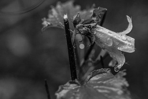 Bluebell, Raindrop, Wild Flower, Summer