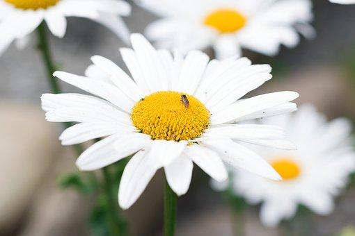 Sunflower, Field, Yellow, Flower, Sunflowers, Nature
