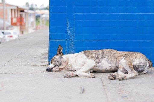 Dog, Puppy, Asleep, Pet, Animal, Animals, Bitch