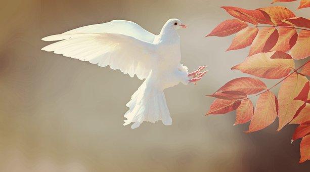 Dove, Bird, Animal, Feather, Plumage, Wing