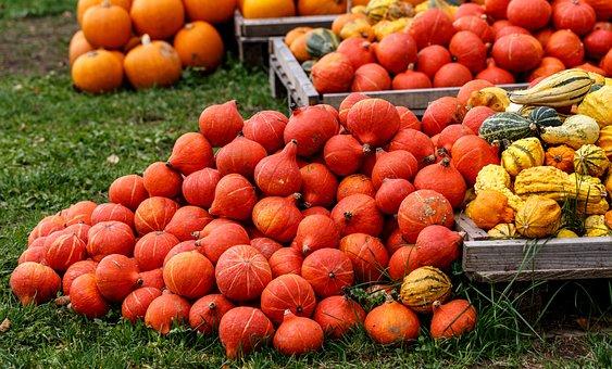 Pumpkins, Autumn, Autumn Decoration, Decoration