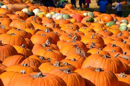Autumn, Thanksgiving, Pumpkin, Nature