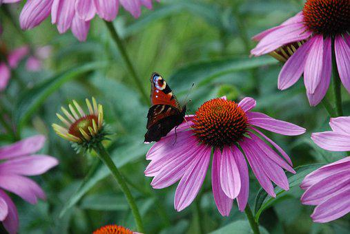 Butterfly, Blossom, Bloom, Close, Nature, Summer
