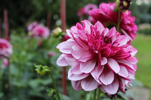 Flower, Intense Color, Pink, Beautiful