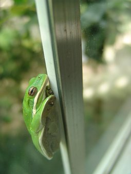 Frog, Window, Green, Nature, Toad, Funny, Glass, House