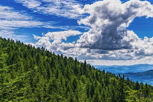 Bavarian Forest, Forest, Sky, Trees, Landscape, Hiking