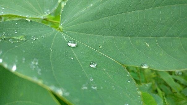 Rain, Leaf, Green, Drop