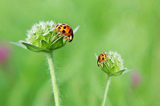 Ladybug, Luck, Art, Cheerful, Meadow, Satisfaction