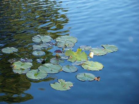 Lotus, Zen, Meditation, Yoga, Relaxation, Meditating