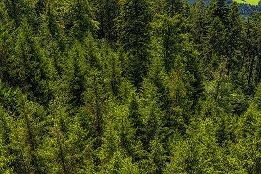Forest, Trees, Nature, Landscape, Forests, Sunlight