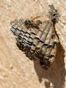 Wasps' Nest, Wasps, Plant Architecture, Plant Geometry