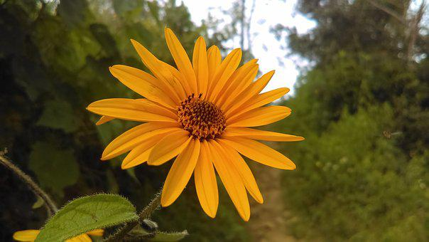 Yellow Flower, Nature, Yellow, Flowers, Plant