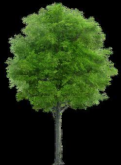 Tree, Nature, Forest, Trunk, Vegetation, Wood, Png