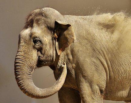 Elephant, Sand, High Throw, Pachyderm, Animal