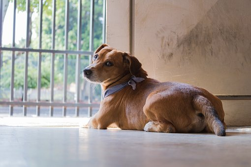 Dog, Puppy, Pet, Animal, Animals, Bitch, Profile Dog