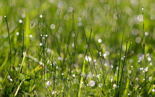 Clover, White, Grass, Rosa, Shine, Bokeh, Morning