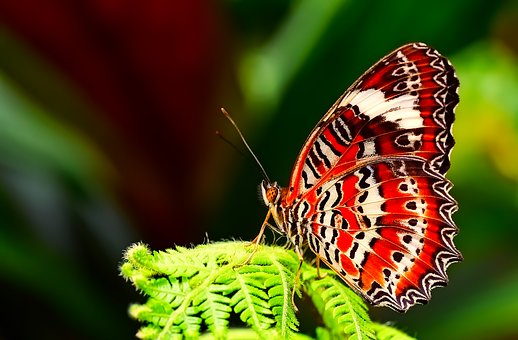 Butterfly, Insect, Macro, Closeup, Beautiful, Plant
