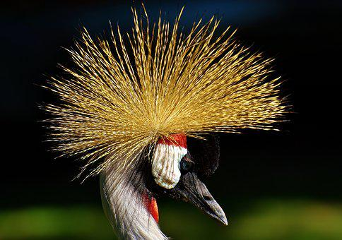 Bird, Feather, Colorful, Poultry, Funny, Beautiful