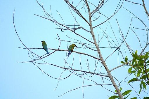 Tree, Trees, Branch, Bird, Birds, Life, Animals