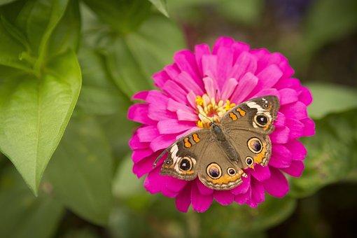 Flowers, Butterfly, Butterfly On Flower