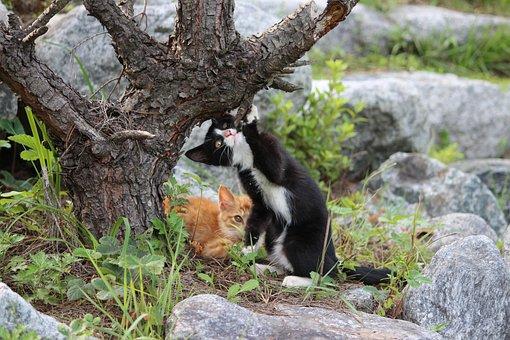Cat, Kitty, Baby Cats, Kitten, Pet
