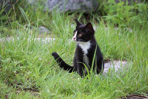 Cat, Kitty, Baby Cats, The Black Cat, Pet, Kitten