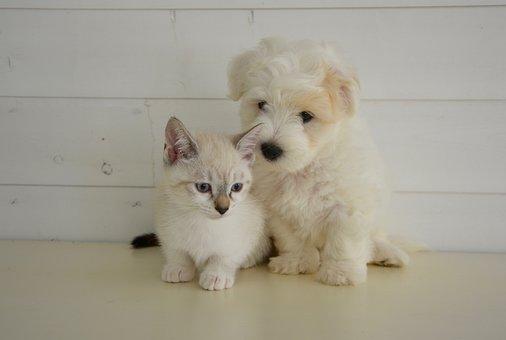 Dog Cat, Kitten, Domestic Animal, Dog, Nature, Coat