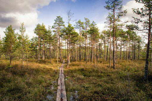 Footpath, Forest, Swamp, Nature, Path, Landscape, Green