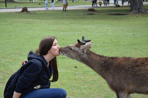 Roe Deer, Kiss, Woman, Happy, Animal, Love For Animals