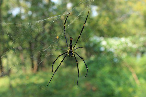 Spider, Web, Design, Nature, India, Spiderweb