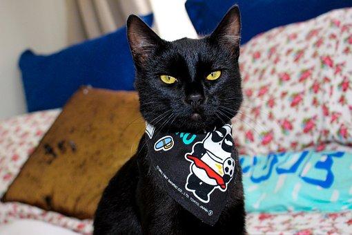 Cat, Pet, Animal, Cute, Domestic, Kitten, Funny, Kitty