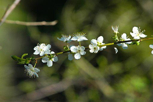 Blossoms, Flowers, Forest, Nature, Summer, Spring