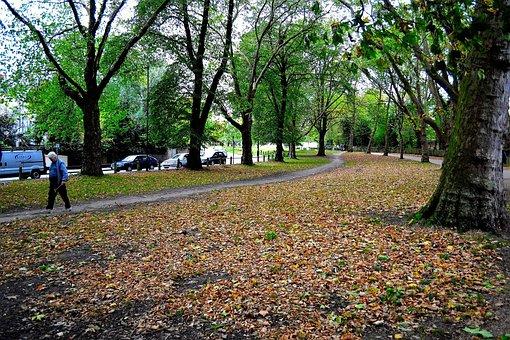 Green, Park, Old, Nature, Grass, Summer, Outdoor