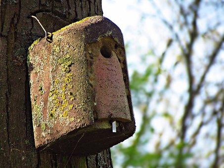 Shed, Lęg, Birds, Nature, Bird, Park, Little Bird