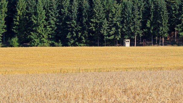 Meadow, Perch, Landscape, Hunting, Forest, Grain