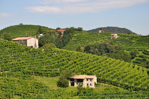 Wine, Winery, Italy, Vineyard, Prosecco, Outdoor