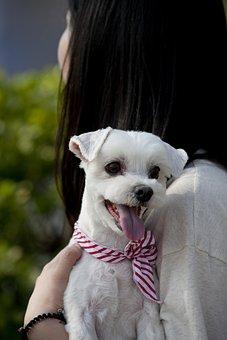 Pet Dogs, Canine Companion, Animal, Dog, Stare, Park