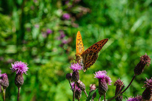 Butterfly, Summer, Nature, Close, Insect, Animal, Wing